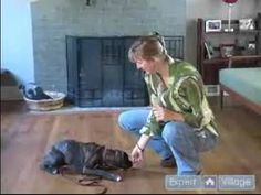 How to Train a Boxer Puppy : How to Teach Your Boxer to Lie Down