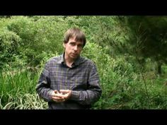 """I've been very keen on trying my gardening in the permacultural methodology.  This vid shows what a backyard 'food forest' can look like, while Michael Crawford (author of """"Creating a Food Forest"""") discusses the advantages of said system."""