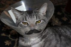 Kitty stache