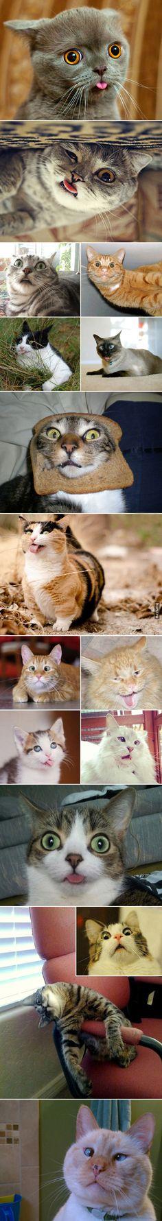 Коты с идиотским выражением лица. Или морды?  Huru.ru