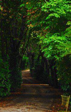 Jardines del Campo del Moro Madrid Foto Lena Richter