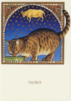FRANCIEN VAN WESTERING - TAURUS CAT