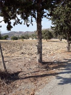 Code No: 10074 A residential land for sale in the village of Asgata in Limassol.