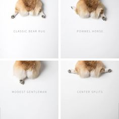 "Gorgeous butt types <3 by Geordi La Corgi - autumn's favorite is ""modest gentleman"""