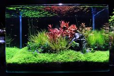 Xz's High tech + low tech nano experiments - The Planted Tank Forum