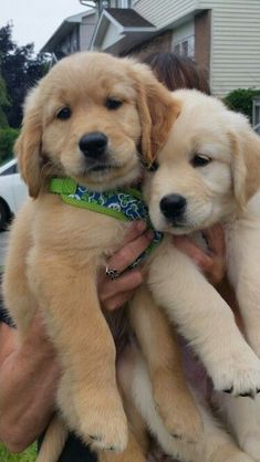 Super Cute Puppies, Cute Baby Dogs, Cute Little Puppies, Cute Dogs And Puppies, I Love Dogs, Pet Dogs, Doggies, Pets, Cheap Puppies