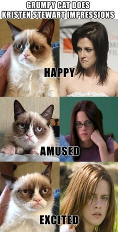 Funny pictures about Grumpy Cat Impressions. Oh, and cool pics about Grumpy Cat Impressions. Also, Grumpy Cat Impressions. Memes Humor, Cat Memes, Funny Memes, Jokes, Haha Funny, Funny Cats, Funny Animals, Funny Stuff, That's Hilarious