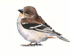 Goldfinch Painting Original Watercolor Painting by jodyvanB
