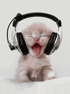 Kitty Beats - Is this Boo Boo Kitty (for all the Empire Fans? techno kitty, gangster rap kitty, hip hop kitty or Rock kitty? Kitty Dee Jay Music Animated baby Kittens ❤༻ಌOphelia Ryan ಌ༺❤ Cute Funny Animals, Cute Baby Animals, Funny Cute, Animals And Pets, Funniest Animals, Cute Kittens, Cats And Kittens, Kittens Meowing, Ragdoll Kittens