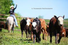 Cowboys, ranching,