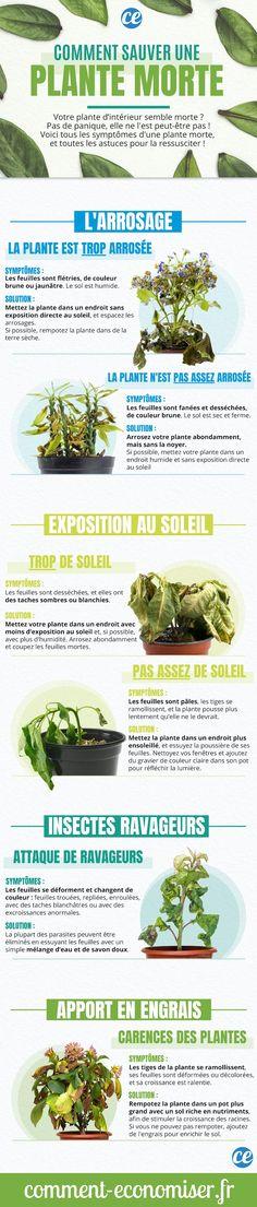 Comment sauver une plante verte qui meurt ? Que ça soit pour sauver une plante verte ou une plante grasse d'intérieur, il existe des astuces et des recettes simples efficaces pour la faire repartir au naturel.