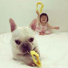 1歳半❤️ #frenchbulldog #frenchie #dog #daughter #babygirl #フレンチブルドッグ #女の子