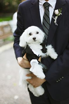 Dogs in Weddings Ideas | photography by http://www.adriennegunde.com/
