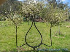 árbol de conformación-9
