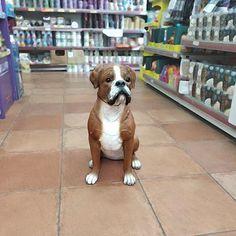 """Ψάχνουμε όνομα για το νέο μας...""""κατοικίδιο""""! Τι θα μας προτείνατε;; -->www.petshop.gr<-- . . Follow us: @houseofpetsxatzopoulos . . #dog #dogs #puppy #dogstagram #instadog #pet #pets #loveanimals #doglovers #cutedog #dogofthedy #dogofinstagram #lovedogs #lovepets #skilos #skylos #katoikidia #σκυλος #κατοικιδια #petgrooming #houseofpets #petshopgreece #petshop #pet_shop_gr Love Dogs, Animals, Animales, Animaux, Animal, Animais"""