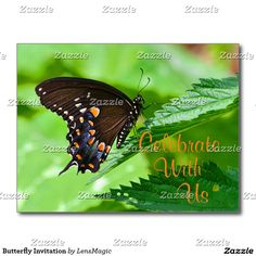 Butterfly Invitation Postcard