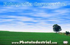 Plantação de soja na época da colheita, Passo Fundo no Rio Grande do Sul. Soy plantation.
