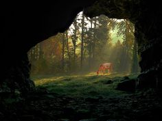Cave view deer