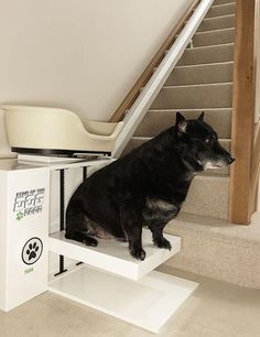 Elevator for fat dogs. Or cats. Paralyzed Dog, Dog Stairs, Stair Lift, Fat Dogs, Cool Inventions, Pet Accessories, Disney Films, Puppy Love, Dachshund