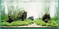 Aquarium Art! - Cool/ Classic/ Amazing/ Artistic Pictures - Pakistan's Largest Infotainment Portal / Janubaba.com