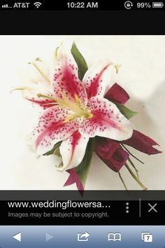 Maroon lily corsage
