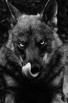 Wolfer. I am hungry and you look delicious.