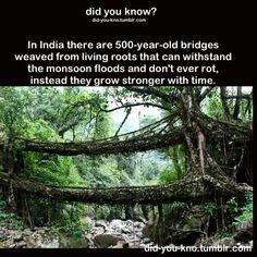 500 year old bridge