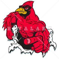 Mascot Clipart Image of A Muscular Cardinal Tearing Thru A Hole