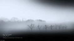 Trees in a foggy day by nickeller