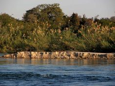 Rivière Kavango, Namibie Africa, Water, Travel, Outdoor, Gripe Water, Outdoors, Viajes, Destinations, Traveling