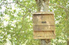 DIY: Bat House Plans on Instructables by Slylee ~ did you know that a single brown bat eats up to 1,000 mosquitoes in an hour?