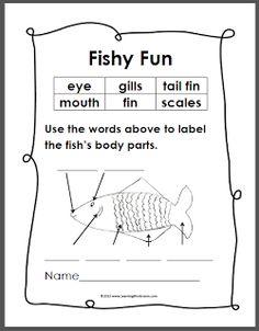 Simple Fish Anatomy Diagram