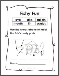 Worksheets Labeling Of Of A Fish Body free printable for the rainbow fish by marcus pfister heres a simple diagram of that kids can label and color its little follow up to yesterdays blog post with word s