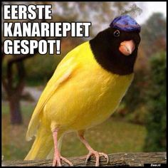 Punny Puns, Word F, Funny Films, Period Humor, Netherlands, Haha, Laughter, Funny Pictures, Cute