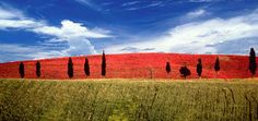 Colline della #Toscana