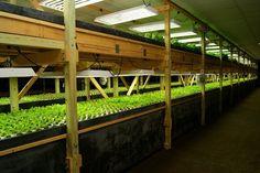 New York Aqua Vita Aquaponic Farm. This is an excellent example of intensive . New York Aqua Vita Aquaponics Fish, Fish Farming, Aquaponics System, Indoor Aquaponics, Aquaponics Greenhouse, Vertical Vegetable Gardens, Vertical Farming, Hydroponic Gardening, Organic Gardening