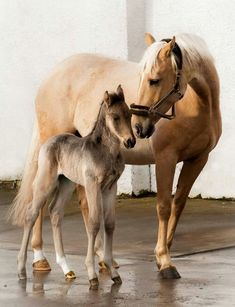 Mommy loves you, horse, hest, foal, mare, love, caring, animal, beautiful, gorgeous, mother and child, photo