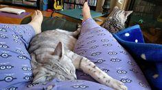 omeone's missed mamma! A few have apparently..... Poor boys!  Puppy and Rascal #Caturday #kittenwatch #cassiethekitten #cassiethekittenispregnant #EgyptianMau #SilverEgyptianMau #egyptianmausoftwitter #egyptianmausofinstagram #egyptianmausoffacebook #catsoftwitter #catsofinstagram #catsoffacebook #catsofscope #cutekitten #petsoriginal #theellenshow #bestmeow #Excellent_Kittens #cutepetclub
