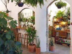 a6c5999ab Conheça seis lojas de plantas em SP que valem como um passeio