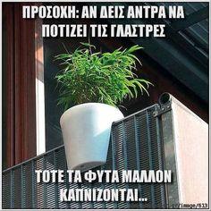 ΠΡΟΣΟΧΗ: ΑΝ ΔΕΙΣ ΑΝΤΡΑ ΝΑ ΠΟΤΙΖΕΙ ΤΙΣ ΓΛΑΣΤΡΕΣ ΤΟΤΕ ΤΑ ΦΥΤΑ ΜΑΛΛΟΝ ΚΑΠΝΙΖΟΝΤΑΙ... - photocast.gr
