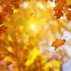 Fall is a season of change. It reminds us that every now and then, we need to work on letting go of the things that no longer serve us. Autumn Day, Autumn Leaves, Maple Leaves, Fall, Leaf Photography, Autumn Scenes, Detailed Image, Letting Go, Seasons