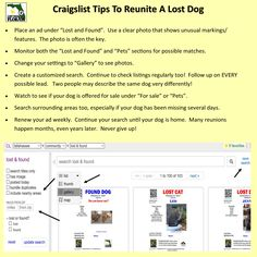 Craigslist tips to reunite a lost dog