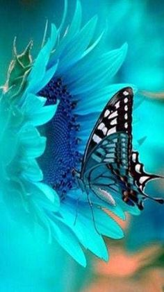 Teal wings compliment the flower.