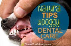 Doggy-Dental-Care