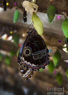 Butterfly - by Al Bourassa