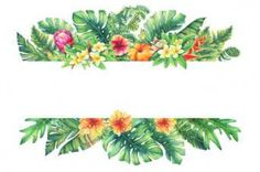 Banner with branches purple Protea flowers, plumeria, hibiscus and tropical plants. Hand drawn watercolor painting on white background. - Buy this stock illustration and explore similar illustrations at Adobe Stock Hawaiian Flowers, Tropical Flowers, Tropical Plants, Watercolor Plants, Watercolor Paintings, Tropical Flower Tattoos, Floral Frames, Tropical Background, Background Ideas