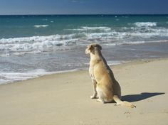 """"""" There's Nothing Quite Like Solving the Worlds Problems While Relaxing on the Beach."""""""