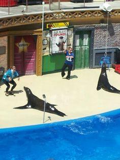 Sea lions dancing Gagnam Style