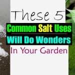 5 Uncommon Ways To Use Common Salt In The Garden