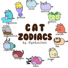 Zodiac Signs Animals, Zodiac Signs Chart, Zodiac Signs Astrology, Zodiac Memes, Zodiac Art, Zodiac Star Signs, Zodiac Horoscope, Cat Signs, Funny Signs